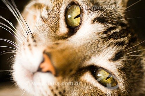 Assunto: Gato doméstico (Felis silvestris catus)  / Local:  Florianópolis - Santa Catarina (SC) - Brasil  / Data: 12/2009