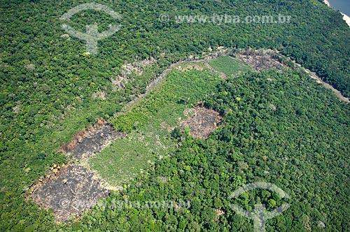 Assunto: Clareira desmatada na Floresta amazônica para fazer roças de agricultura de subsistência ao sul de Nova Olinda do Norte  / Local:  Amazonas (AM) - Brasil  / Data: 11/2007