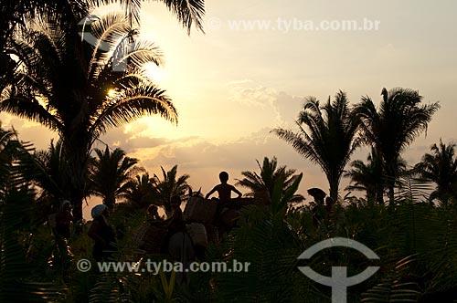 Assunto: Campo de Babaçus / Local: Juverlânia - Tocantins (TO) - Brasil / Data: 20/11/2009