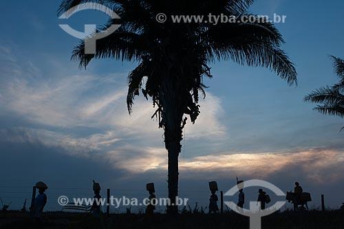 Assunto: Campo de Babaçu / Local: Juverlânia - Tocantins (TO) - Brasil / Data: 20/11/2009