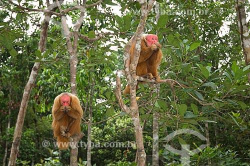 Assunto: Casal de Uacari-vermelhos (Cacajao rubicundus), no complexo turístico Amazon Ecopark Jungle Lodge  / Local:  Manaus - Amazonas (AM) - Brasil  / Data: 01/2006
