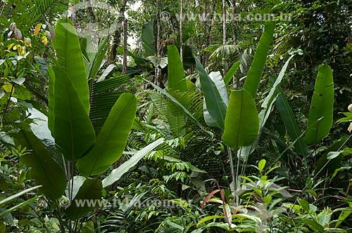 Assunto: Reserva Biológica do Cuieiras, BR-174  / Local: perto de Manaus - Amazonas - Brasil  / Data: 09/01/2006