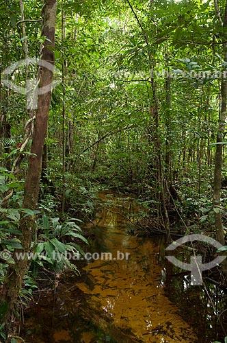 Assunto: Igarapé na floresta amazônica de terra-firme na Reserva Biológica do Cuieiras  / Local: perto de Manaus - Amazonas - Brasil  / Data: 09/01/2006