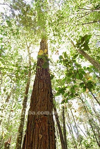 Assunto: Jacarandá (Machaerium villosum) formando mata ciliar no Parque Nacional das Emas  / Local: Goiás (GO) - Brasil  / Data: 29/07/2006