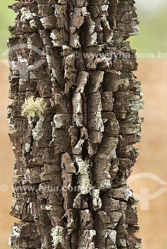 Assunto: Angico - árvore típica do Cerrado  / Local: Parque Nacional das Emas - Goiás (GO) - Brasil  / Data: 07/09/2007