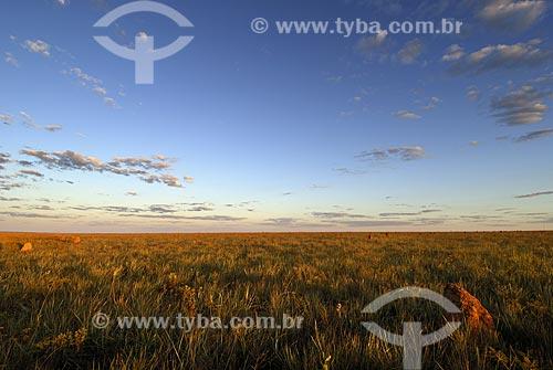 Assunto: Vegetação rasteira denominada Campo Limpo no Parque Nacional das Emas  / Local: Goiás (GO) - Brasil  / Data: 30/07/2006