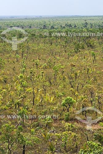 Assunto: Vegetação formada por arbustos no cerrado brasileiro denominado campo sujo -  / Local: Parque Nacional das Emas - Goiás (GO) - Brasil  / Data: 07/09/2007