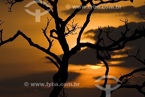 Assunto: Pôr do sol em campo sujo no Parque Nacional das Emas  / Local: Goiás (GO) - Brasil  / Data: 16/09/2007