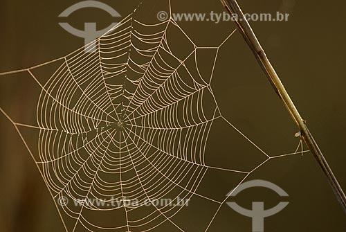 Assunto: Teia de aranha  / Local: Parque Nacional das Emas - Goiás (GO) Brasil  / Data: 17/09/2007