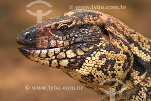 Assunto: Teiú lagarto também conhecido como Tiú (Tupinambis merianae) no Parque Nacional das Emas  / Local: Goiás (GO) - Brasil  / Data: 11/09/2007