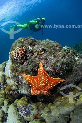 Assunto: Estrela-do-mar (Oreaster reticulatus) e mergulhadora em Angra dos Reis, RJ / Local: Baía da Ilha Grande - Angra dos Reis - Rio de Janeiro (RJ) - Brasil / Data: 04/06/2010