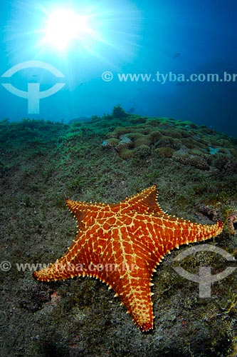 Assunto: Estrela-do-mar em Angra dos Reis, RJ / Local: Baía da Ilha Grande - Angra dos Reis - Rio de Janeiro (RJ) - Brasil / Data: 04/06/2010