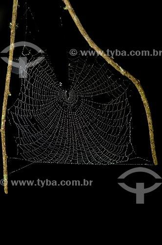 Assunto: Teia de aranha no Parque Nacional do Itatiaia  / Local:  Itatiaia - Rio de Janeiro - RJ - Brasil  / Data: 01/2009