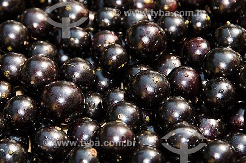 Assunto: Detalhe de grande quantidade de jabuticabas maduras  / Local: Rio Claro - São Paulo - SP - Brasil / Data: 09/2010