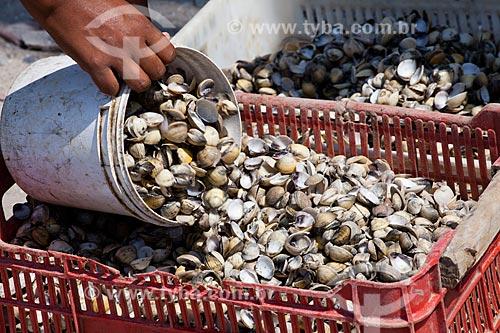 Assunto: Catadores de conchas da Iha de Deus  / Local:  Recife - Pernambuco  / Data: 15/10/2010