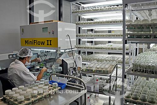 Assunto: Laboratório de pesquisa genética de cana de açúcar - cultura de meristemas - células embrionárias  / Local:  Campinas - São Paulo - SP  / Data: 12/2008