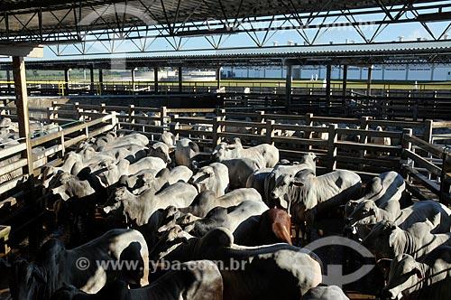 Assunto: Curral de frigorifico -  Gado para abate  / Local:  Campo Grande - Mato Grosso do Sul - MS  / Data: 01/2009