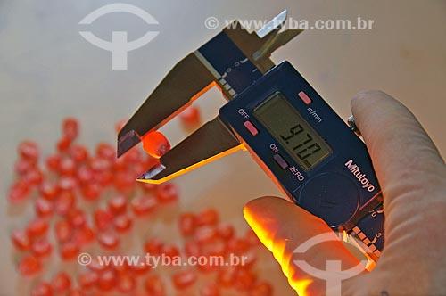 Assunto: Labotatório Físico-Fisiológico - medição de sementes para teste de germinação  / Local:  Uberlândia - Minas Gerais - MG  / Data: 12/2008