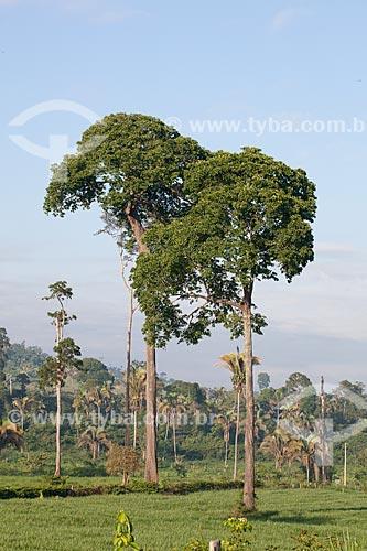 Assunto: Castanheiras e babaçus em paisagem típica da Área de Proteção Ambiental (APA) do Igarapé do Gelado  / Local:  próximo à cidade de Parauapebas - Pará  - Brasil  / Data: 30/10/2010