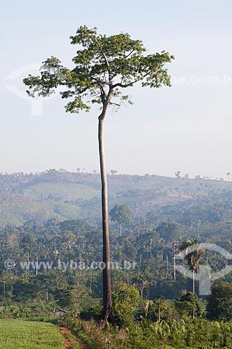Assunto: Castanheira em paisagem típica da Área de Proteção Ambiental (APA) do Igarapé do Gelado  / Local:  próximo à cidade de Parauapebas - Pará  - Brasil  / Data: 30/10/2010