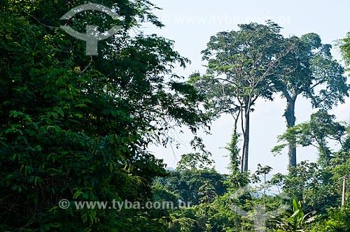 Assunto: Castanheira na Área de Proteção Ambiental (APA) do Igarapé do Gelado  / Local:  próximo à cidade de Parauapebas - Pará  - Brasil  / Data: 10/2010