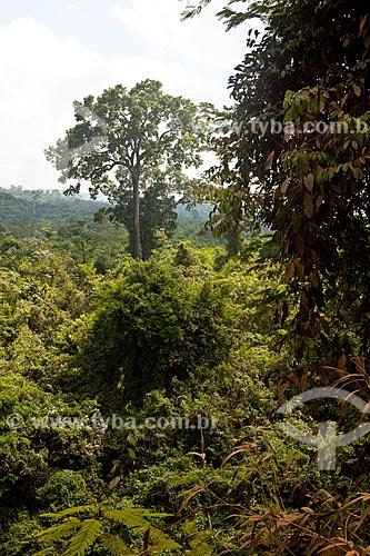 Assunto: Área de Proteção Ambiental (APA) do Igarapé do Gelado  / Local:  próximo à cidade de Parauapebas - Pará  - Brasil  / Data: 31/10/2010