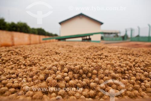 Assunto: Estação Conhecimento - Cooperativa Biojóias - Unidade de Processamento - Estufa externa para secagem das sementes do açaí branco  / Local:  Tucumã - Pará  / Data: 03/11/2010