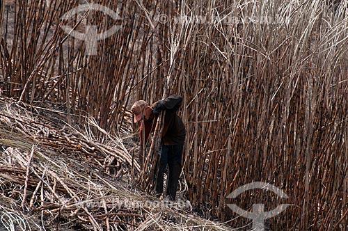 Assunto: Cortadores de cana de açúcar (bóia fria) em canavial às margens da AL 101  / Local:  próximo ao município de  Coruripe -  Alagoas - AL  / Data: 2011