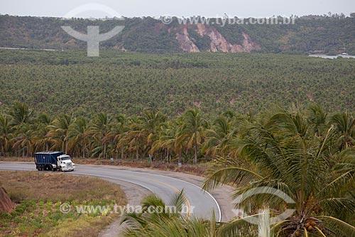 Assunto: Coqueiral às margens da AL 101  / Local:  próximo à  Praia do Gunga - Alagoas  / Data: 2011