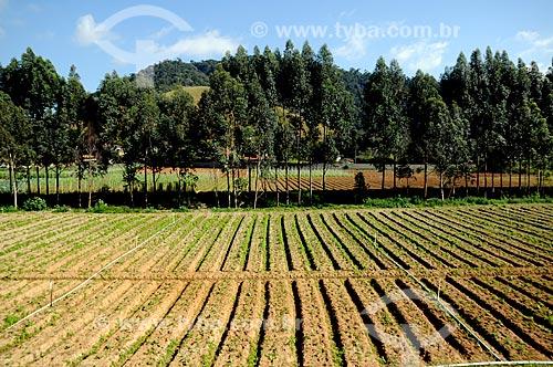 Assunto: Plantação de hortaliças na Região Serrana Fluminense - Estrada Teresópolis-Friburgo  / Local:  Teresópolis - Rio de Janeiro - RJ - Brasil  / Data: 08/2010