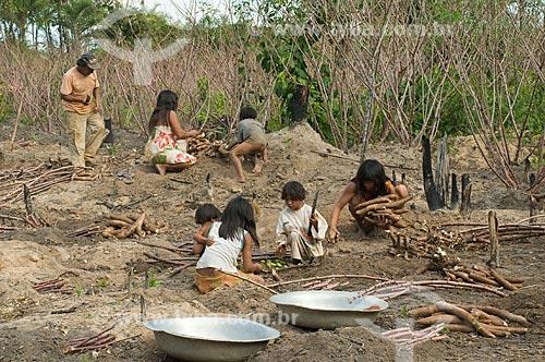 Assunto: Família colhendo mandioca - Adeia Kalapalo - Parque Indígena do Xingu  / Local:  Querência - Mato Grosso - MT  / Data: 07/2009