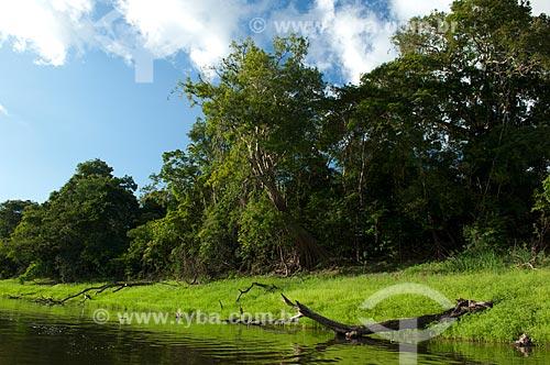 Assunto: Beira de lago de várzea amazônica na Reserva de Desenvolvimento Sustentável Mamirauá - Lago Mamiruá  / Local:  Amazonas - AM - Brasil  / Data: 2007