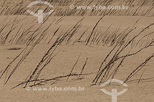 Assunto: Vegetação em praia fluvial  / Local:  Praia do Tapiira - Rio Japurá - Reserva de Desenvolvimento Sustentável Amanã - Amazonas - AM - Brasil  / Data: 2007