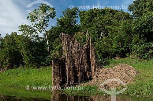 Assunto: Casa de pirarucu na beira do lago Mairauá, vegetação flutuante que se prende em galhos de árvores durante a estação seca  / Local:  Reserva de Desenvolvimento Sustentável Mamirauá - Amazonas - AM - Brasil  / Data: 2007