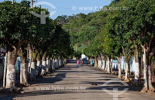 Assunto: Alameda de árvores em rua de Sebastião de Lacerda  / Local:  Distrito de Vassouras - Vale do Paraíba - Rio de Janeiro - RJ  / Data: 02/2011
