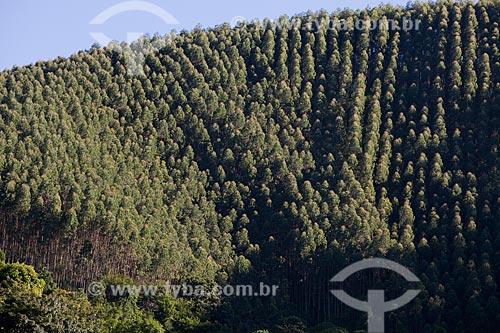 Assunto: Plantação de eucalíptos  / Local:  Sebastião de Lacerda - Distrito de Vassouras - Vale do Paraíba - Rio de Janeiro - RJ  / Data: 02/2011