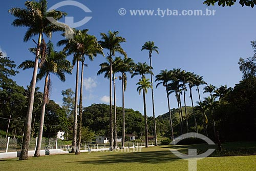 Assunto: Palmeiras imperiais na Fazenda Guaritá  / Local:  Sebastião de Lacerda - Distrito de Vassouras - Vale do Paraíba - Rio de Janeiro - RJ  / Data: 02/2011