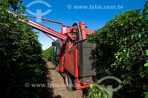 Assunto: Colheita mecanizada de café - variedade Mundo Novo  / Local:  Garça - São Paulo - SP  / Data: 06/2010