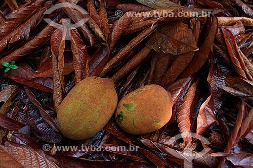 Assunto: Fruta do Cupuaçu  / Local: Manaus - Amazonas (AM) - Brasil  / Data: 03/2011