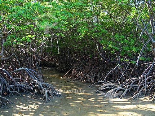 Assunto: Manguezal na foz do Rio Ipojuca - Porto de Galinhas  / Local: Ipojuca - Pernambuco (PE) - Brasil / Data: 03/2011