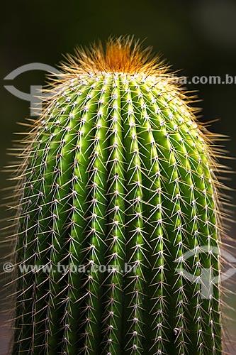 Assunto:  Detalhe de cactus no Jardim Botânico  / Local: Rio de Janeiro  -  Rio de Janeiro (RJ)  -   Brasil  / Data: Fevereiro de 2010