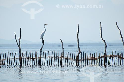 Assunto: Garça sobre curral ,  como é conhecida a técnica para pesca de peixes na fundo da Baía de Guanabara,  proximo a São Gonçalo. / Local: Rio de Janeiro  -   Rio de Janeiro (RJ)  -  Brasil  / Data: Fevereiro de 2010