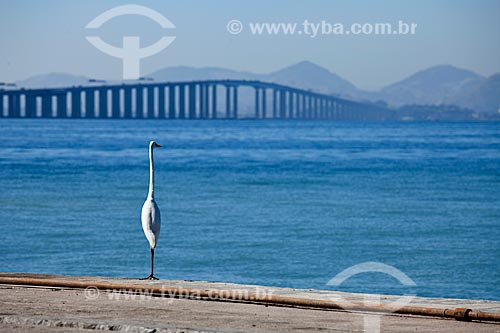 Assunto: Garça na beira da Baía de Guanabara com Ponte Rio-Niterói ao fundo / Local: Rio de Janeiro - RJ - Brasil / Data: 06/2010