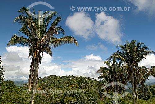 Assunto: Palmeira babaçu no Quilombo dos Palmares - Serra da Barriga / Local: União dos Palmares - Alagoas (AL) - Brasil / Data: 04/2010