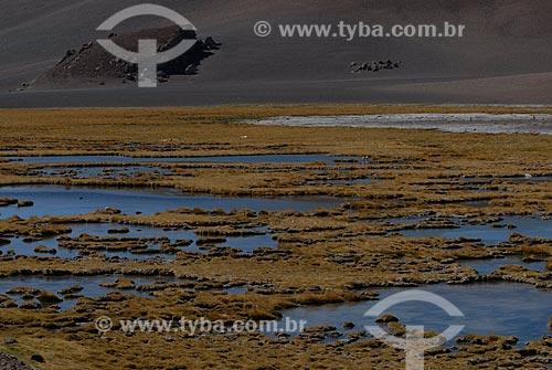 Assunto: Lagoa de Kuepiaco (Laguna Kuepiaco) - Deserto do Atacama / Local: Chile - América do Sul / Data: 01/2011