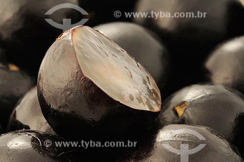 Assunto: Jabuticaba (Myrciaria cauliflora) / Local: Estúdio / Data: 12/2008