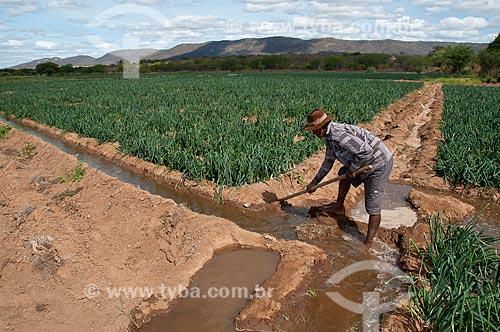 Assunto: Pequeno produtor de cebola no sertão pernambucano / Local: Distrito Umãs - Salgueiro - Pernambuco (PE) - Brasil / Data: 08/2010