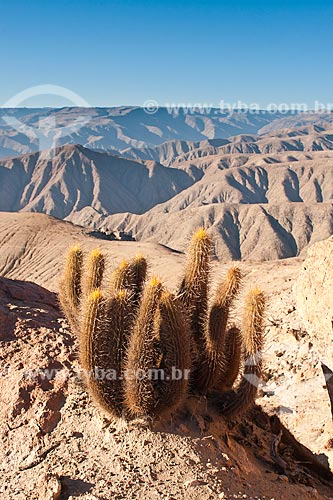 Assunto: Cacto na trilha para o cume do Cerro Blanco, a duna mais alta do mundo / Local: Nasca - Departamento de Ica - Peru - América do Suleru / Data: 18/05/2011