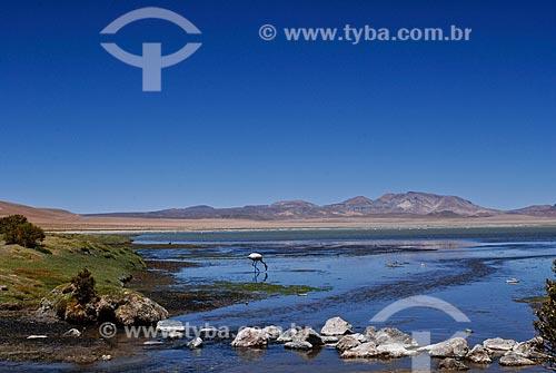 Assunto: Laguna de Tara - Reserva Nacional Los Flamencos / Local: Deserto de Atacama - Norte do Chile - América do Sul / Data: 01/2011