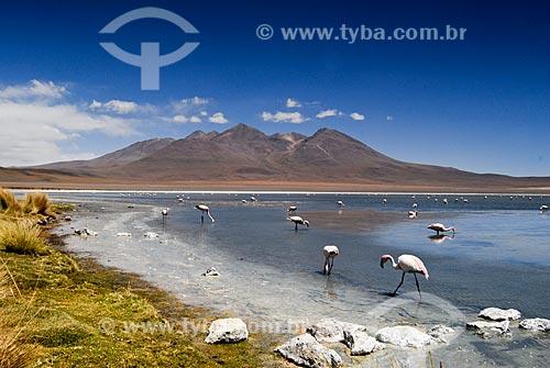 Assunto: Flamingos na Laguna Cañapas  -  Reserva Nacional de Fauna Andina Eduardo Avaroa / Local: Bolívia - América do Sul / Data: 01/2011